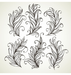 Feathers leaves Hand drawn vector image vector image