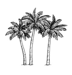 Ink sketch of palm trees vector