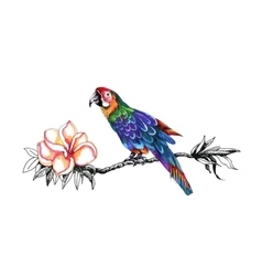 Beautiful colorful parrot on twig vector image