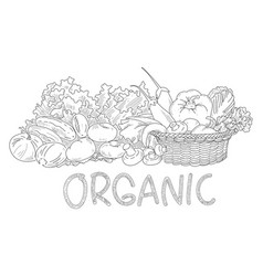 drawing vegetable vector image