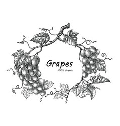 grapes frame hand drawing vintage engraving vector image