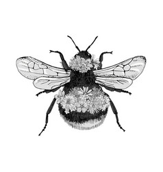 hand drawn bumblebee isolated on white background vector image