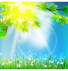 Natural background on sky and grass vector