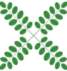 Acacia twigs - star vector