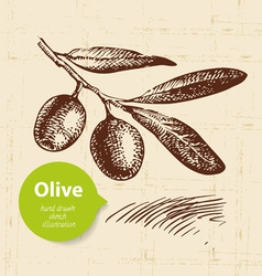 Hand drawn olive vintage background vector image vector image