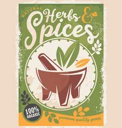 herbs and spices poster design vector image
