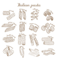set of different pasta shapes vector image