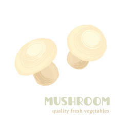 fresh mushroom isolated on white background vector image vector image