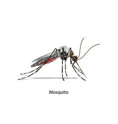 mosquito side vector image