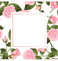 Pink rose on white banner card vector