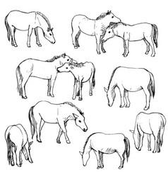 Set horses vector
