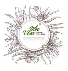 Aloe vera circle hand drawn frame vector