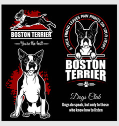 Boston terrier - set for t-shirt logo and vector