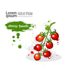 cherry tomato hand drawn watercolor vegetables on vector image