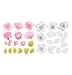 Collection cherry flowers set cherry blossom vector