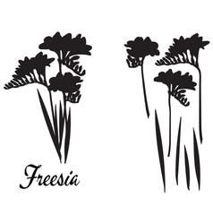 Freesia silhouette bouquet vector