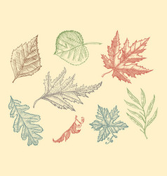 leaves set flower and medicinal herb rustic vector image