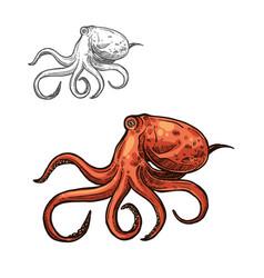 Octopus sea animal sketch red ocean mollusk vector