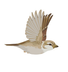 Realistic sparrow flying colorful vector