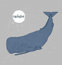 sperm whale cachalot vector image
