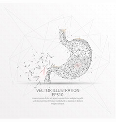 stomach form polygonal low poly wire frame vector image