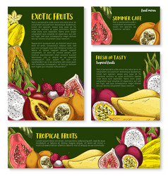 templates of tropical exotic fruits vector image