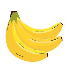 Bananas fruit isolated vector