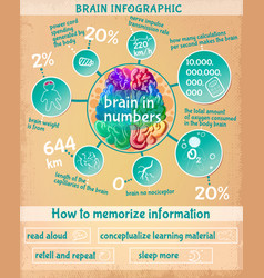 cartoon human brain infographic concept vector image