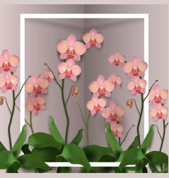 Flower orchids rose vector