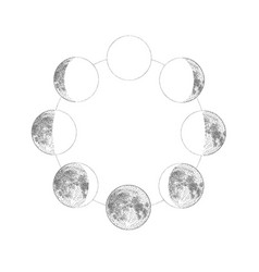 phases moon monochrome hand drawn vector image