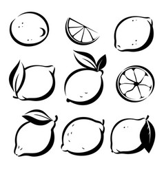 Set of lemons and lime symbols in sketch style vector