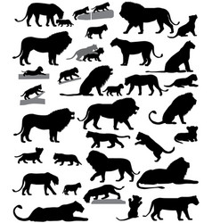 Silhouettes of lions and lion cubs vector