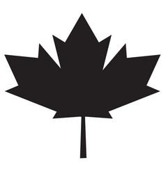 maple leaf icon on white background maple leaf vector image