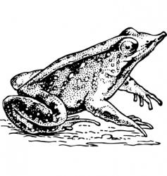 Frog rhinodermatinae vector