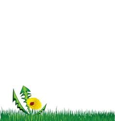 Ladybird on dandelion in the grass background vector