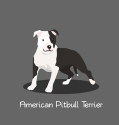 American pitbull terrier pet cartoon graphic vector