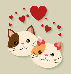 Cute cats couple pets friendly vector