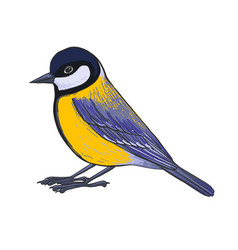 Drawing titmouse vector