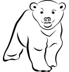little bear vector image
