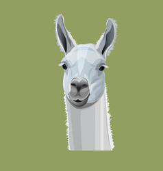 Llama head portrait vector