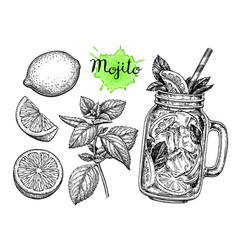 mojito drink and ingredients vector image