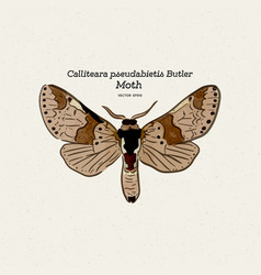 calliteara pseudabietis butler is a moth the vector image