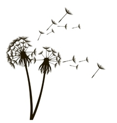 Dandelion Fluffy Flower and Seeds vector