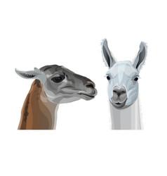 Llama head portraits vector