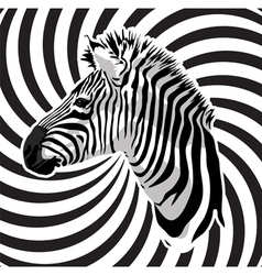 Zebra portrait on abstract strips background vector image