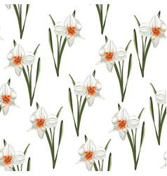 arrangement spring flowers daffodils vector image