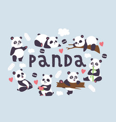 panda bearcat chinese bear with bamboo in vector image