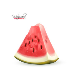 realistic watermelon fruit 3d slice vector image