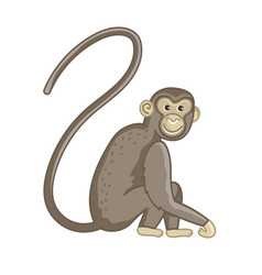 Spider monkey isolated wild ape with long tail vector