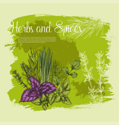 vecor sketch poster of spices and herbs vector image